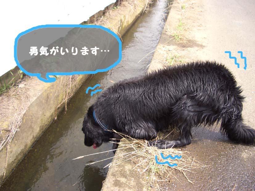 用水路びらき_f0098338_1904388.jpg