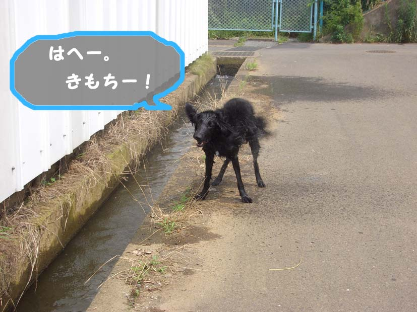 用水路びらき_f0098338_1911388.jpg