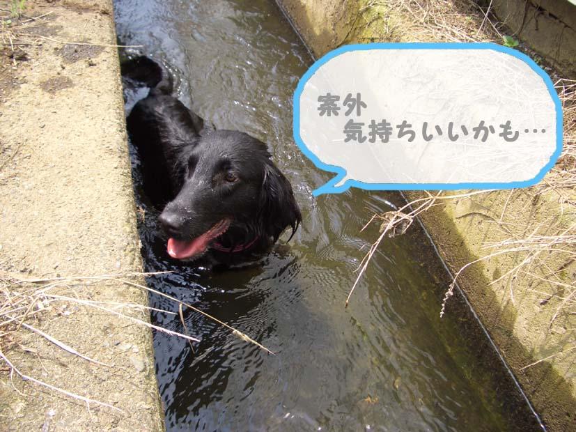 用水路びらき_f0098338_19183249.jpg