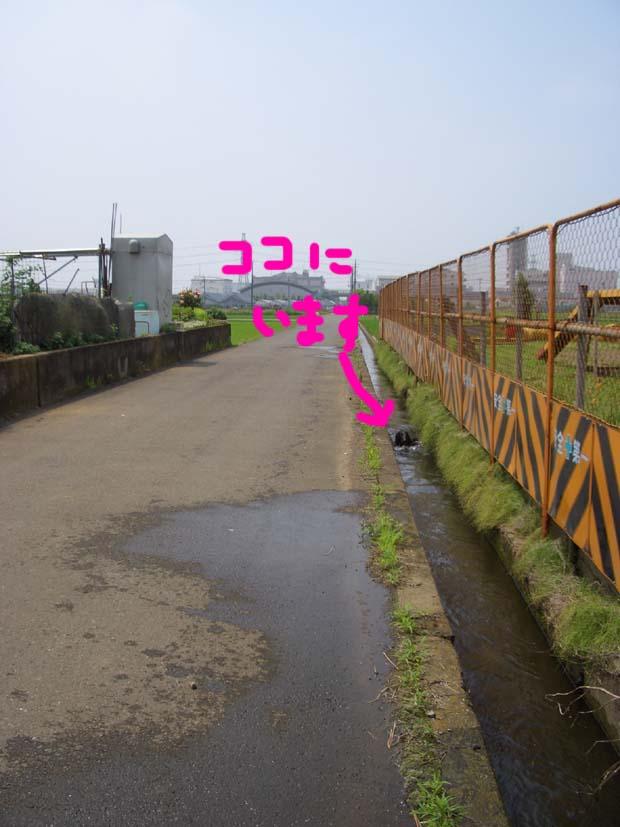 用水路びらき_f0098338_1994539.jpg