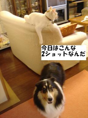 f0046854_2005775.jpg