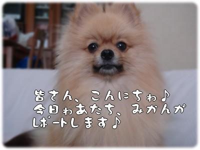 b0078073_2229520.jpg