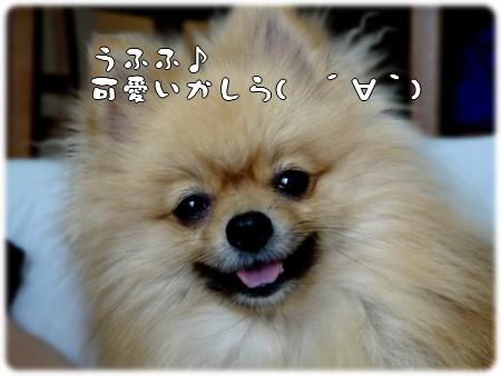b0078073_22343952.jpg