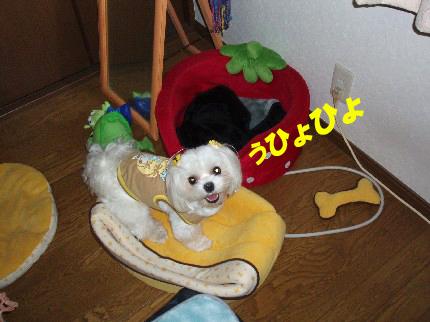b0060071_244221.jpg