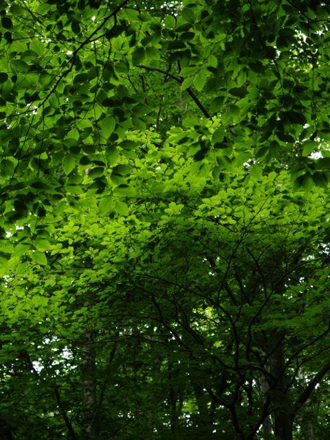 新緑も深緑へ。_a0025576_22213778.jpg