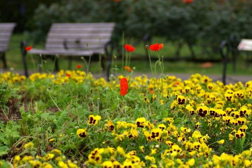 日比谷公園散歩・・その2_b0053019_22541250.jpg