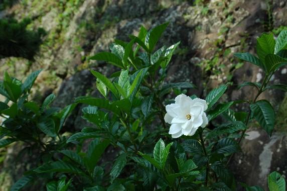和歌山城の外周を歩こう  3_b0093754_2383695.jpg
