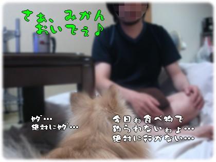 b0078073_2338529.jpg