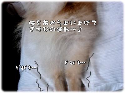 b0078073_2341138.jpg