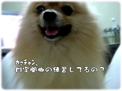 b0078073_23423848.jpg