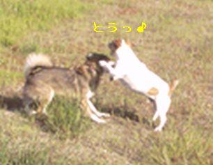 a0054504_20125594.jpg