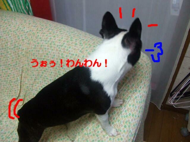 f0059334_915918.jpg