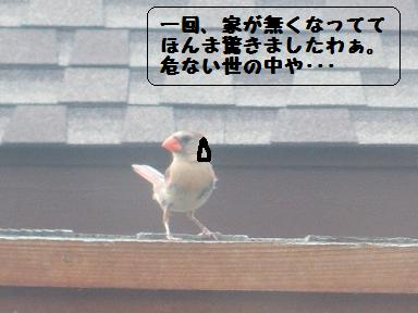 e0014447_151794.jpg