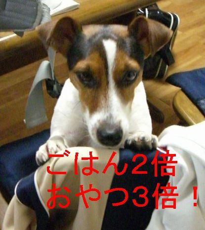 f0053952_1244668.jpg