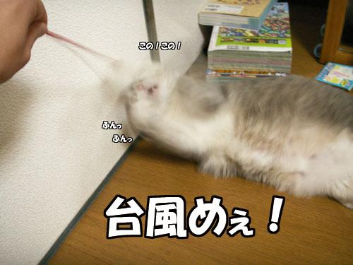 台風接近中・・・が_b0083267_2347269.jpg