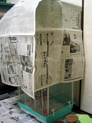 新聞紙で覆ってます