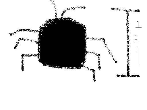 1ミリ程度の黒い虫が床に大量発生しています_b0025008_10302931.jpg