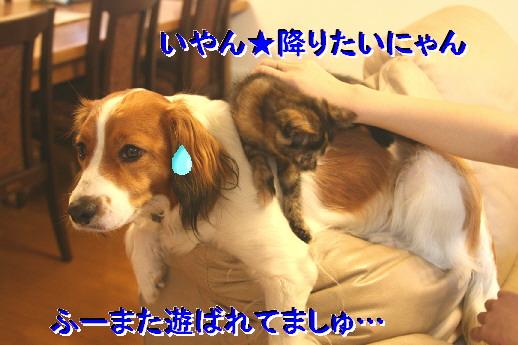 d0013149_14391762.jpg