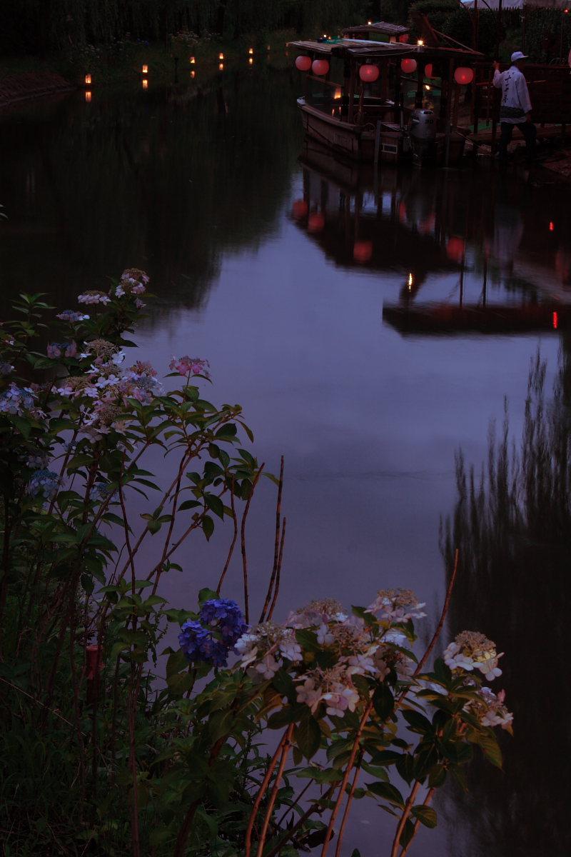京都 伏見/十石船 ライトアップ_f0021869_1524979.jpg