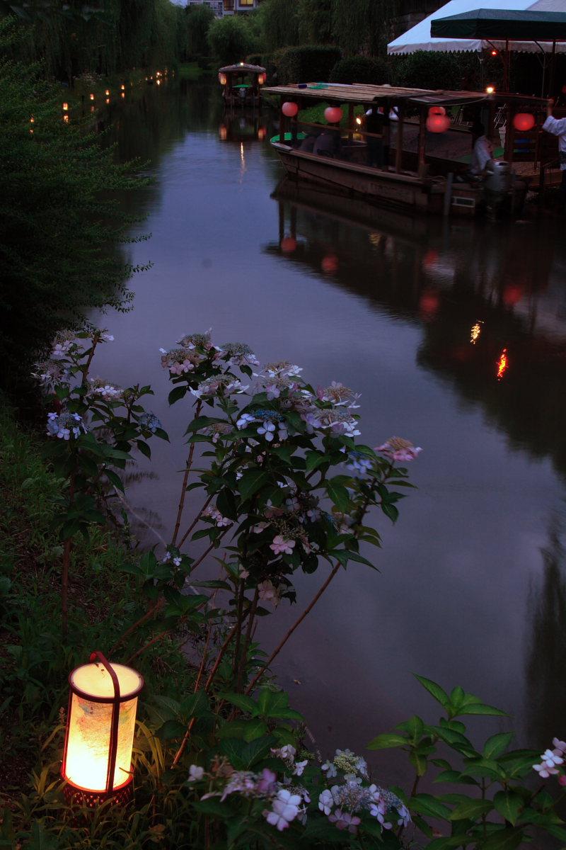 京都 伏見/十石船 ライトアップ_f0021869_153764.jpg