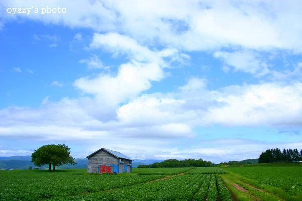曇り・・・_a0071514_21144159.jpg