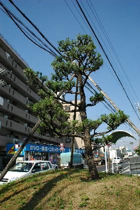 一 里 塚    _b0093754_1253369.jpg