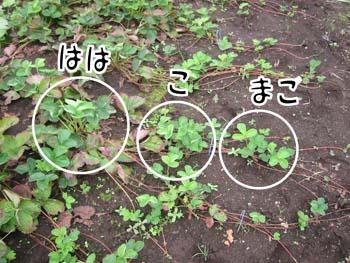 f0097970_1485030.jpg
