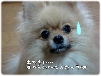 b0078073_231138.jpg