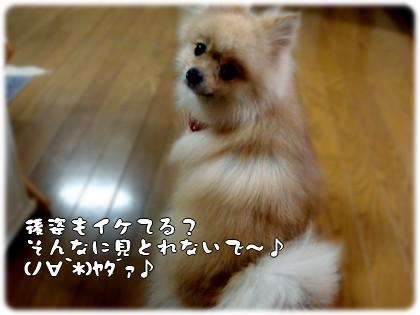 b0078073_23245572.jpg