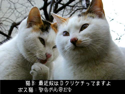 e0033173_1544331.jpg