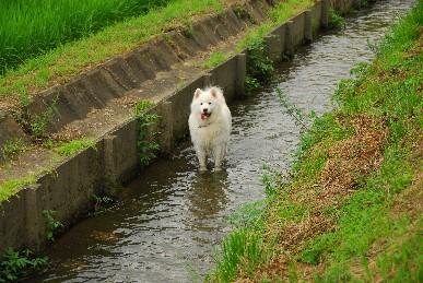 夏の散歩コース♪_a0049296_18272753.jpg