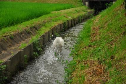 夏の散歩コース♪_a0049296_18293542.jpg