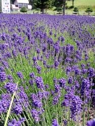 開花&収穫で~す_f0096216_1811954.jpg
