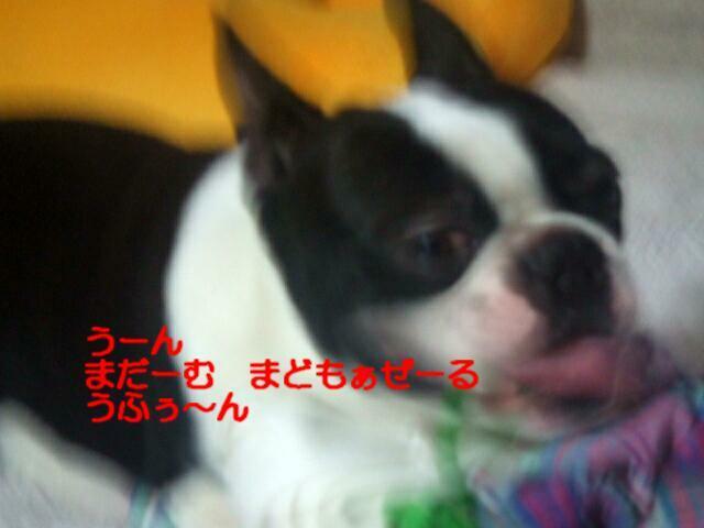 f0059334_1056963.jpg