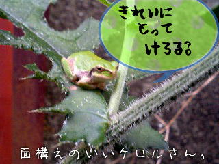 b0048649_011816.jpg
