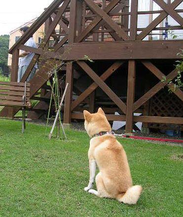 2006年7月9日(日)・・・日曜日の愛ちゃん_f0060461_938989.jpg