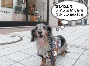 d0020869_20105578.jpg