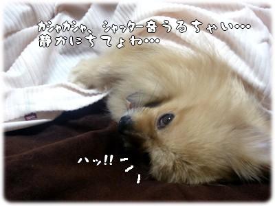 b0078073_223073.jpg
