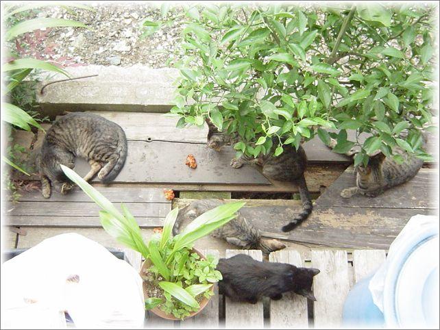 猫の訃報_a0037389_13563572.jpg
