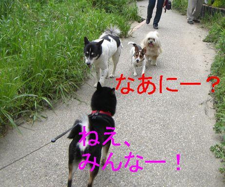 f0053952_19345754.jpg