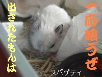 b0016983_20105154.jpg