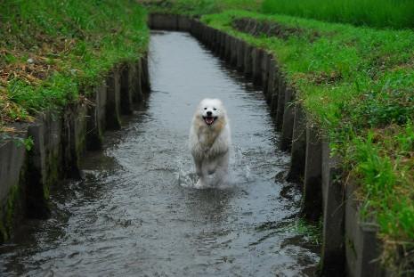 夏の散歩コース♪ ネージュ編_a0049296_2059397.jpg