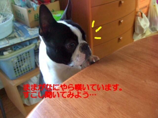 f0059334_922761.jpg