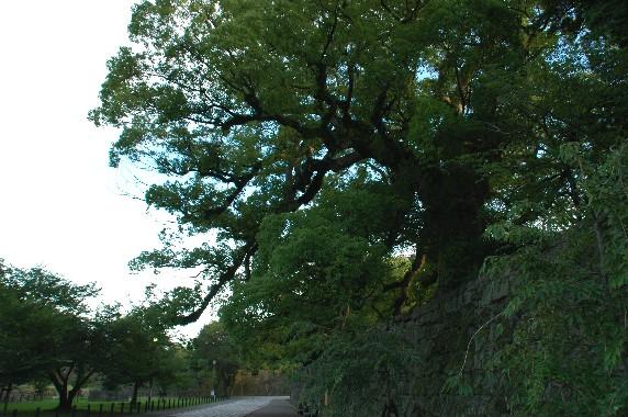 和歌山城公園内を散策_b0093754_0182924.jpg