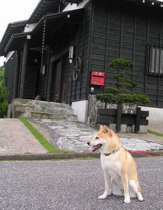 2006年7月12日(水)・・・蒸し暑いよ_f0060461_21201940.jpg