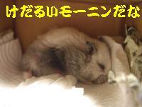 b0016983_9484389.jpg