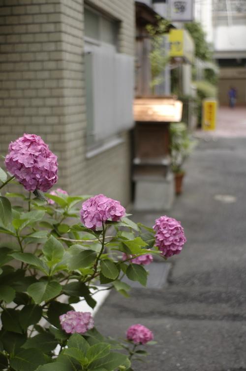 神戸元町_f0042194_21313.jpg