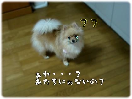 b0078073_0261096.jpg