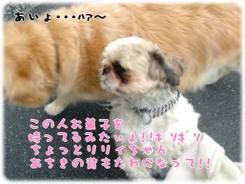 b0078073_23294777.jpg