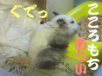 b0016983_218102.jpg